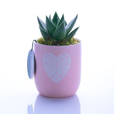 Cactus-wht-bg.jpg