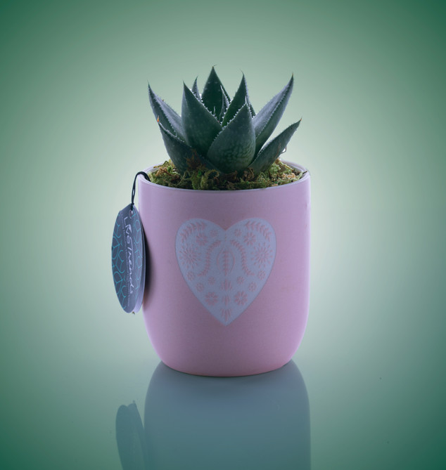 Cactus-grn-bg.jpg