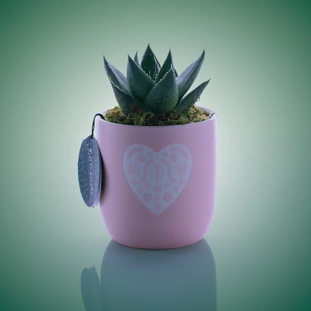 Cactus-grn-bg-Edit.tif