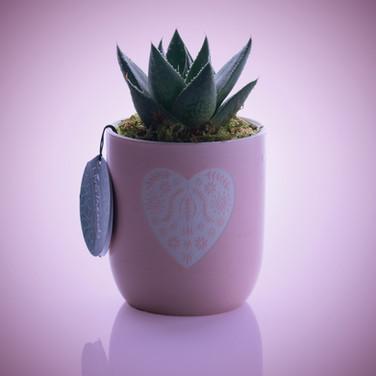 Cactus-pur-bg.jpg