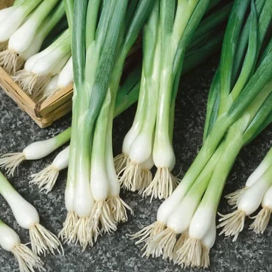 Spring Onion- White Lisbon Seeds