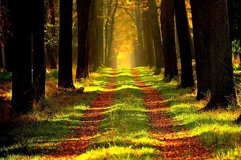 forest-868715__340.jpg