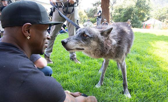 WolfPackGraduation2019__0073.jpg