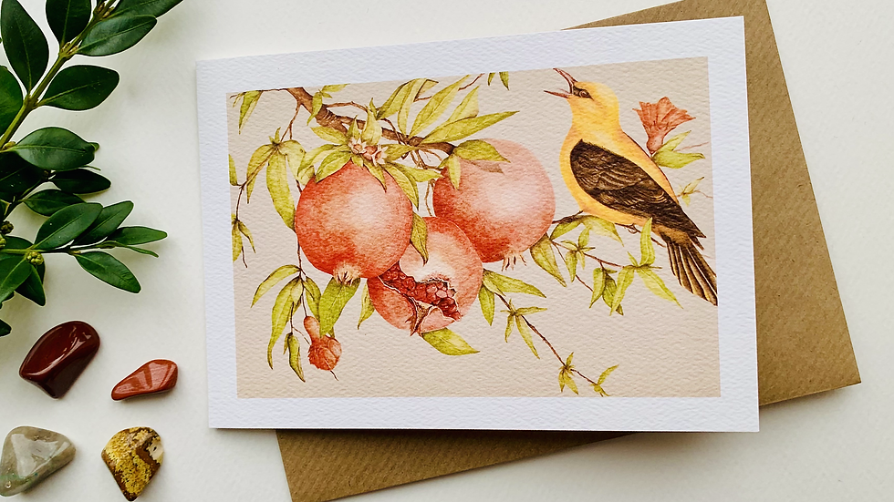Golden Oriole in a Pomegranate tree