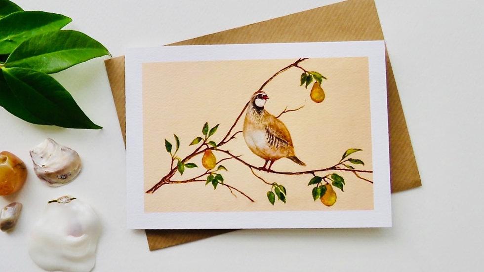 Patridge in a Pear tree