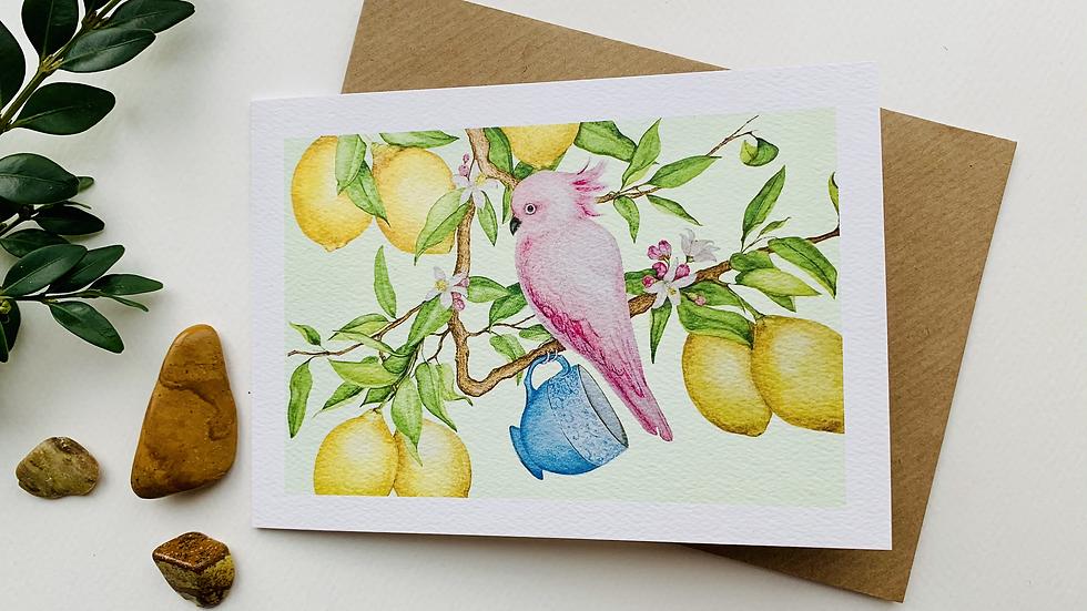 Cocka-tea in a Lemon tree