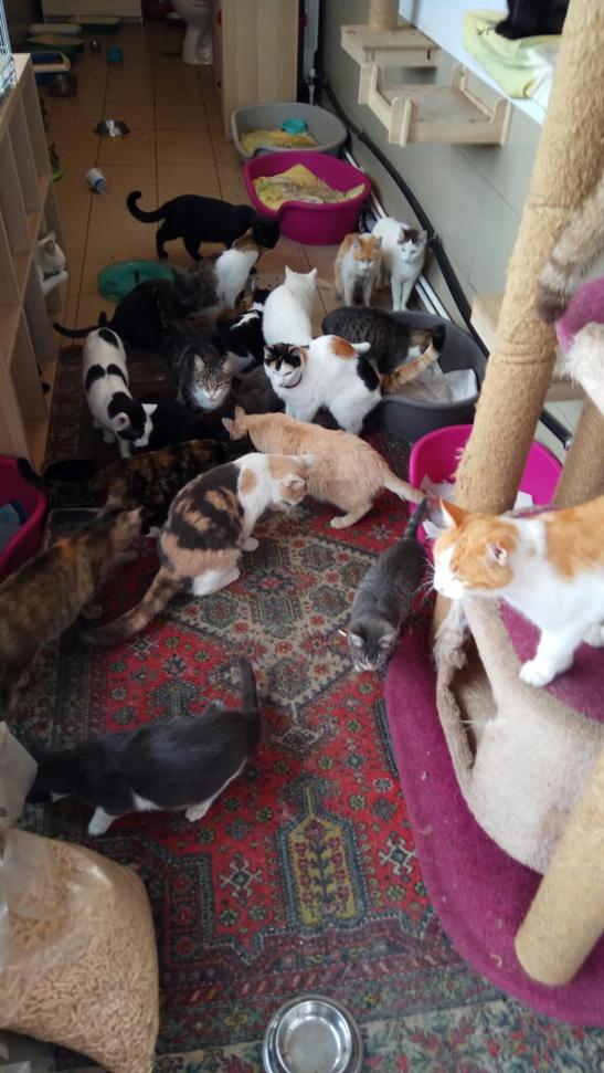 бездомные_кошки.png