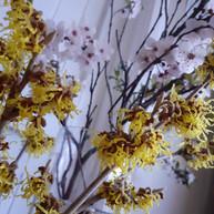 blossom, witch hazel (web version).jpg