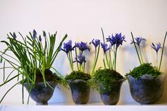 Irises 8.jpg