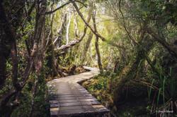Chiloé Islands