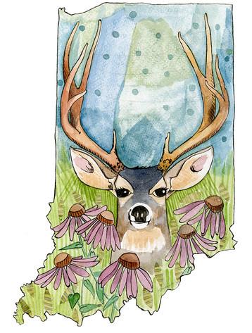 Indiana Deer