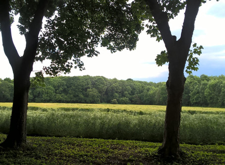 Sophrologie à l'Espace Seniors des Clayes sous Bois