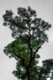 DSC03867-2.jpg
