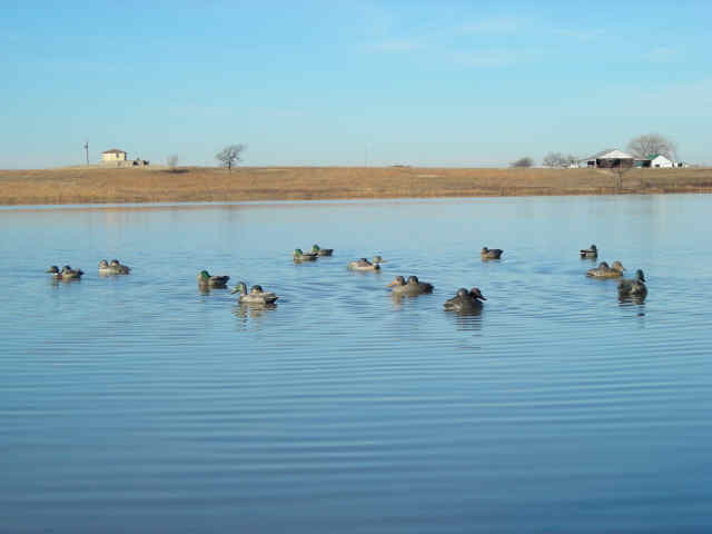 waterfowl_002