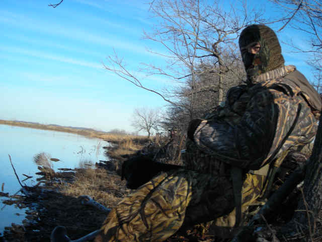 waterfowl_001