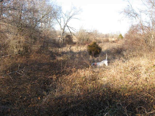 quail_026