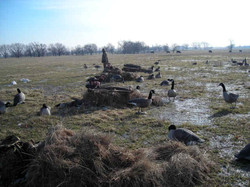 waterfowl_054