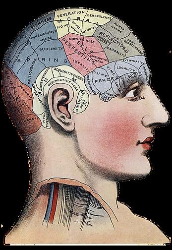 phrenology-chart-skull-divisions.png