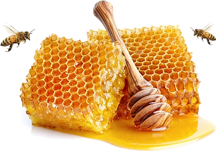 Bees and Honey Comb