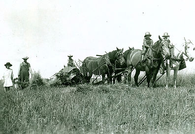 Great grandfather Sture & Grandfather threshing ha