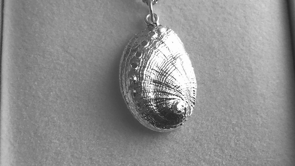 Silver Solid Ormer Shell/chain