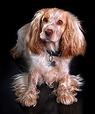 pet photography-stoke-on-trent-staffordshire-newcastle-under-lyme