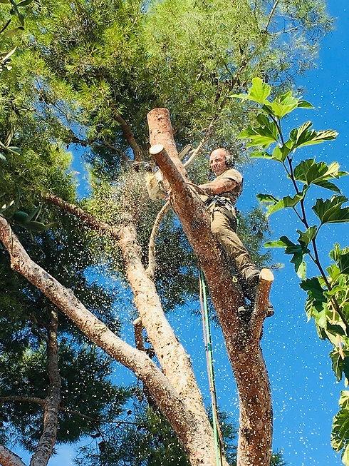 élagage et abattage arbres | Var Gard Bouches-du-Rhone
