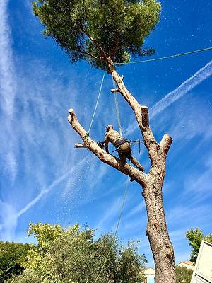 Abattage élagage arbre Var Bouches-du-Rhone Gard Hérault