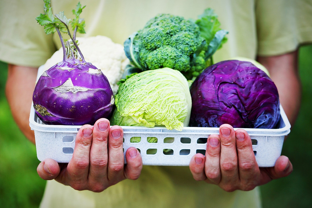 Man holding a basket of cabbage, broccoli and cauliflower.
