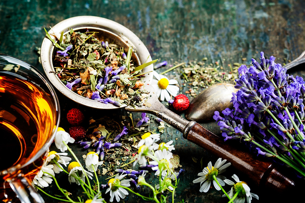 Fresh and dried herbs and flowers for infusion tea on a rustic dark background.