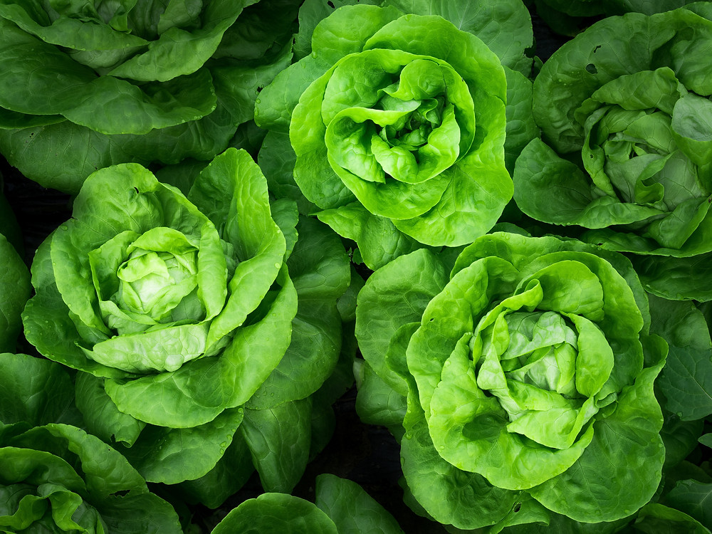 Cabbage hearts, leafy green vegetables