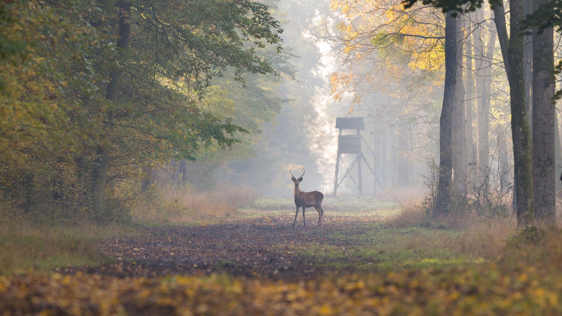 Buck-in-Fog-iStock-508297106.jpg
