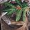 Thumbnail: WJK 2000C Real tree Black