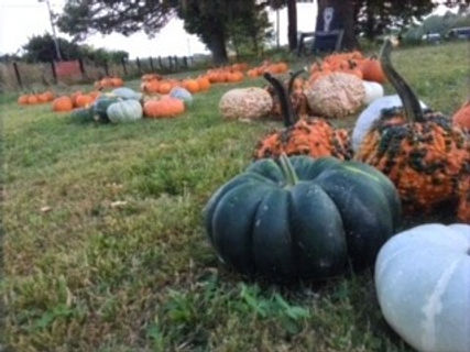 pumpkins_edited.jpg