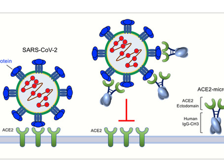 New paper on potential therapy against SARS-CoV-2