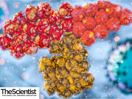 Our work on REGN-COV2 was featured in 'The Scientist' magazine