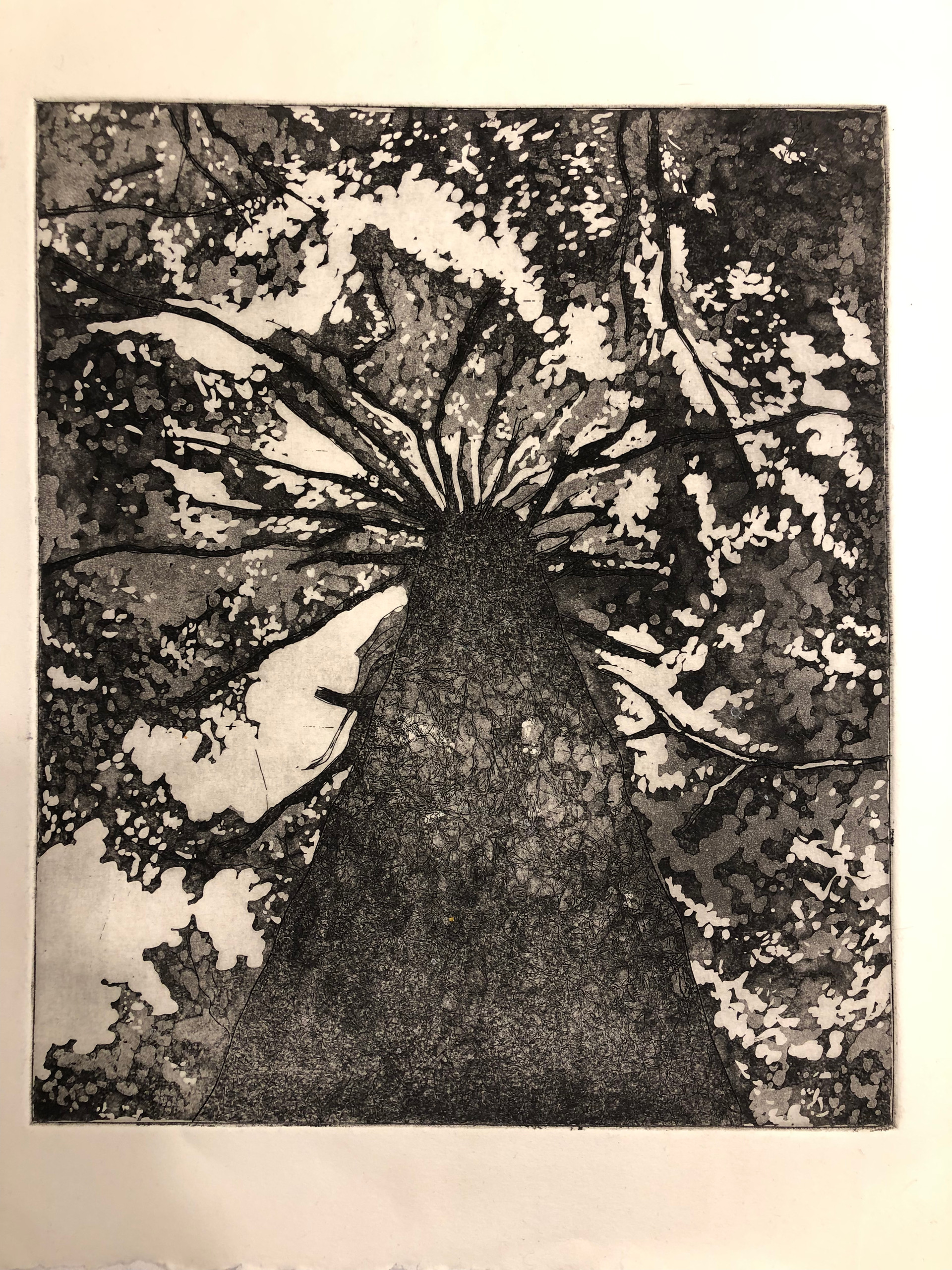 late summer. etched print. ink on cotton rag. 10x12 (print area).