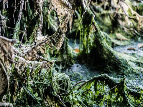 Seaweed Kingdom 2