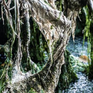 Gate To Seaweed Kingdom
