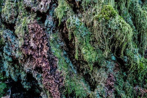 Moss Coat
