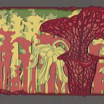 Sarracenia.jpg