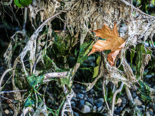 Seaweed Kingdom