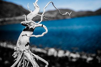 dancing driftwood