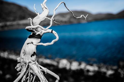 Driftwood Dancer