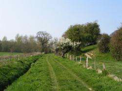 Chemin d'Orival