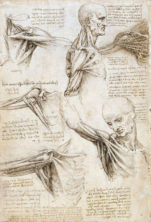 Croquis anatomique de De Vinci vulgarisation scientifique Mo(o)n Label