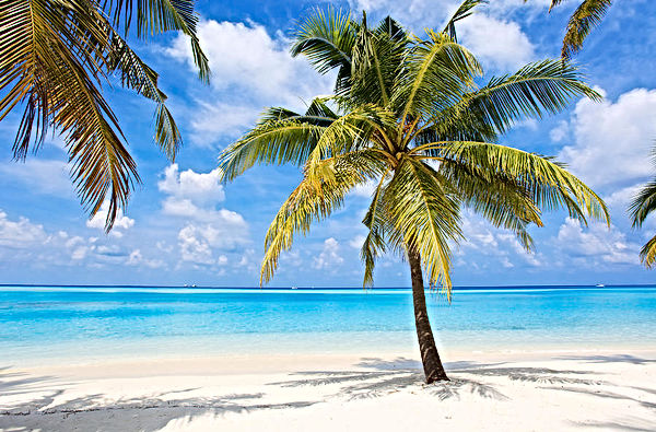palm-trees-on-the-tropical-beach-of-skyn