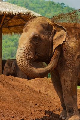 Ферма слонов.jpg