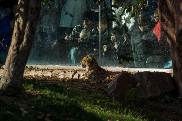 Зоопарк Торонто .jpg