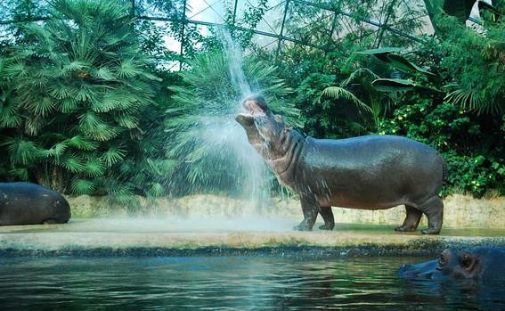 Берлинский зоопарк и аквариум.jpg